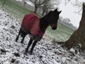 equitation_et_anglais_7