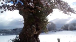 la_neige