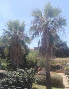 palm_tree_0