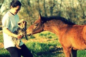 sejour_anglais_et_equitation_bordeaux_